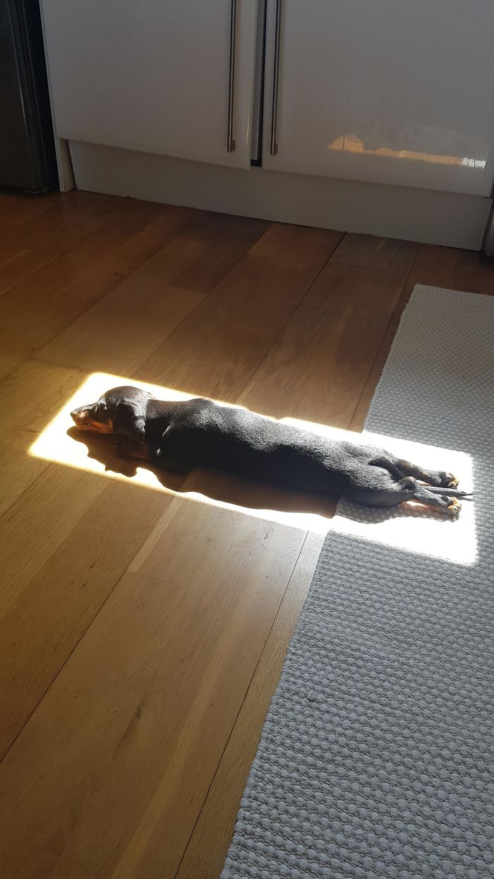 pooch finds perfect spot