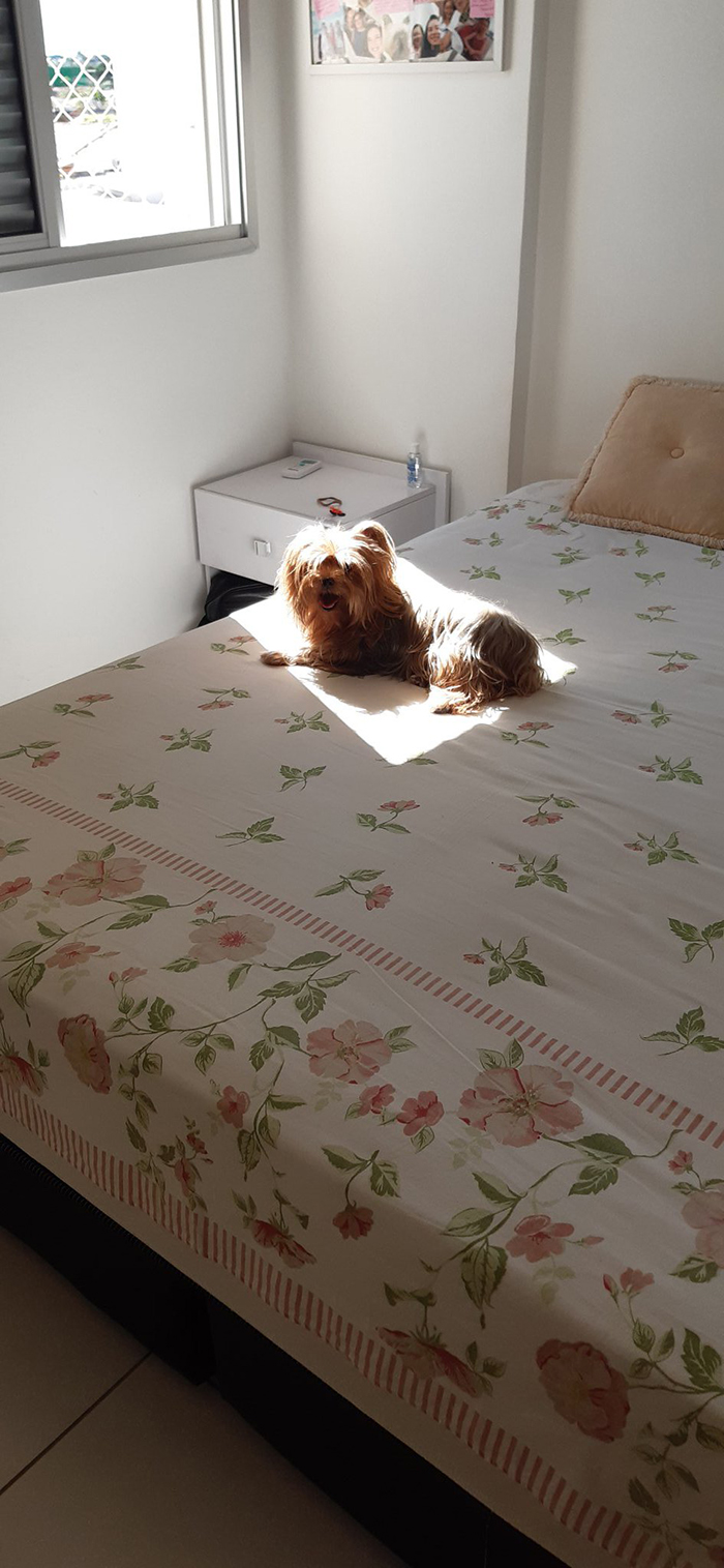 puppy on the bed loves the sun
