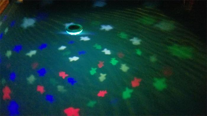 rainbow reef instant aquarium fishes