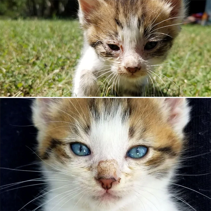 rescue pet stray kitten 5 days difference