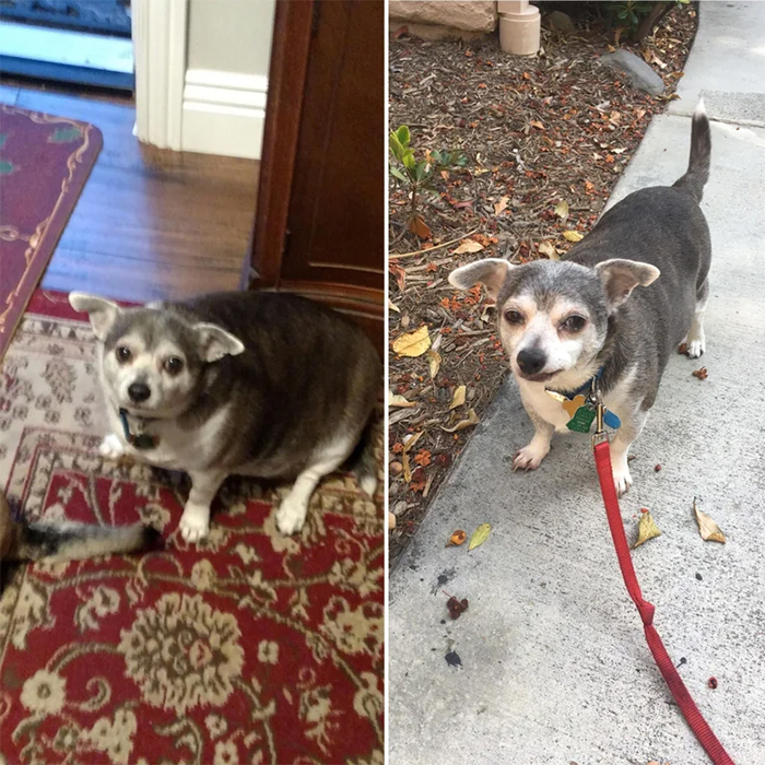 senior neighbor dogs losing weight