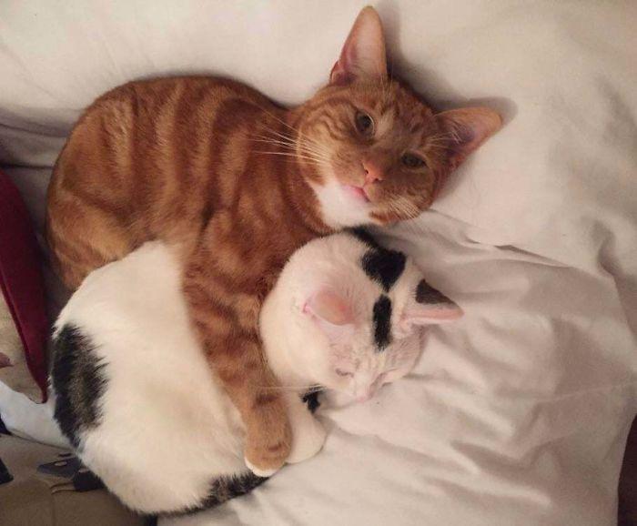 sick kitty comforted by big bro