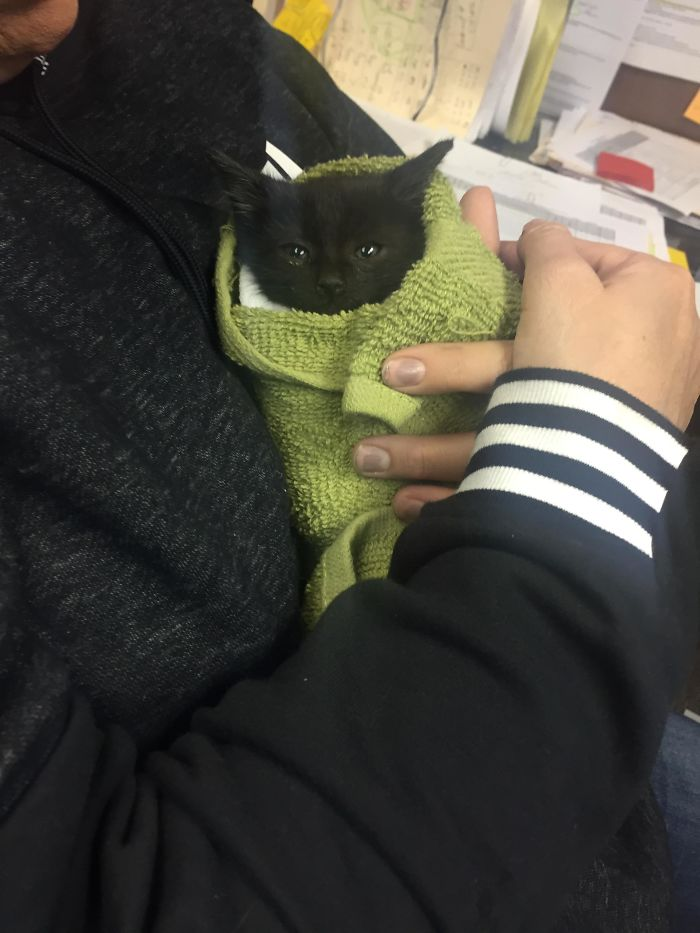 stopped car in traffic to save kitten