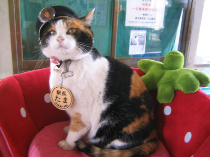 tama the cat station master