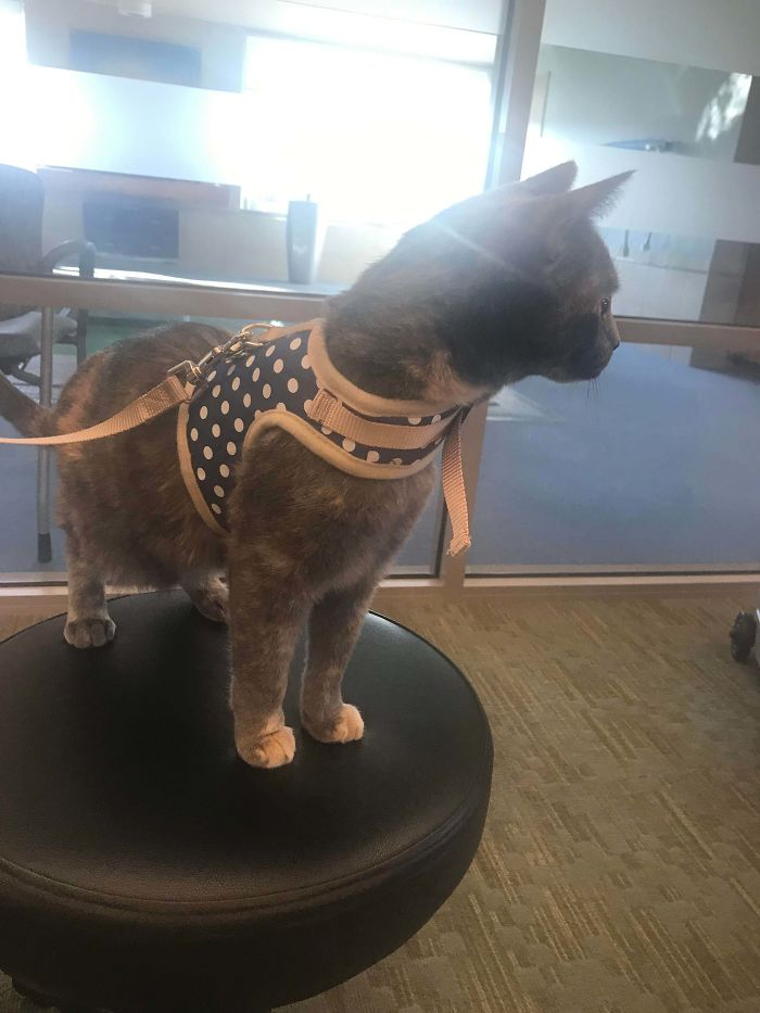therapy kitty on patrol in nursing home