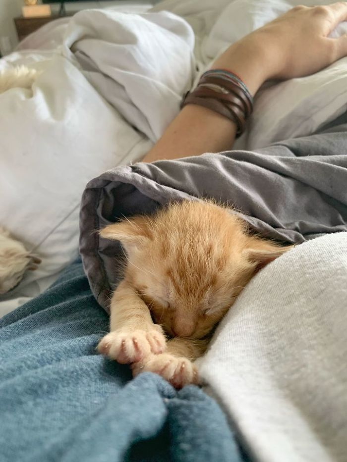 tiny kitten sleeping with owner