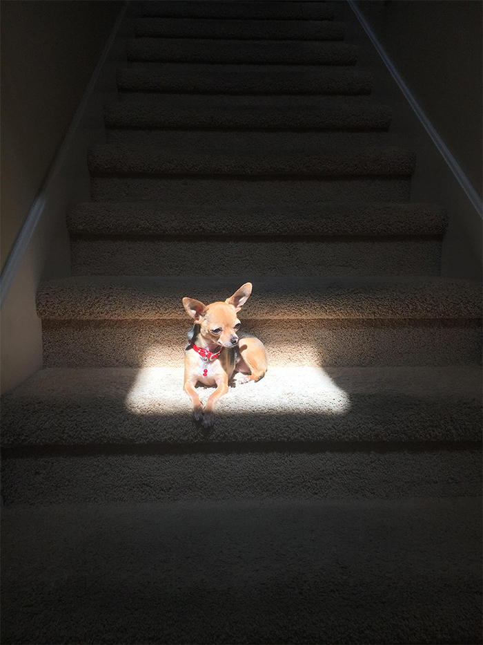 tiny puppy looks like glowing in the sun