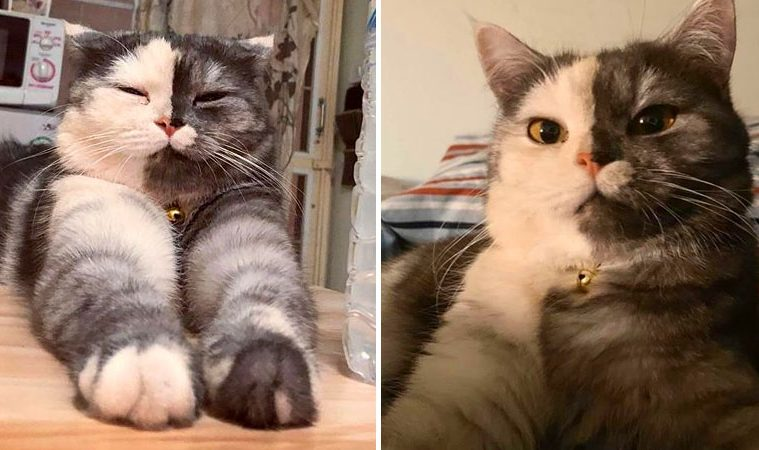 two faced cat wendy