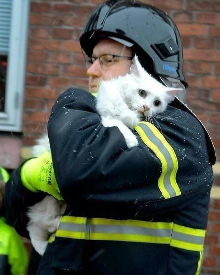 wholesome cat rescued by fireman