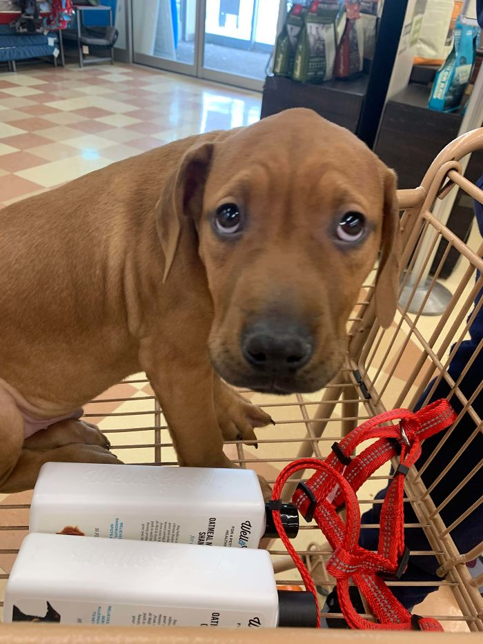 wholesome pet rescue photos adopted dog shopping
