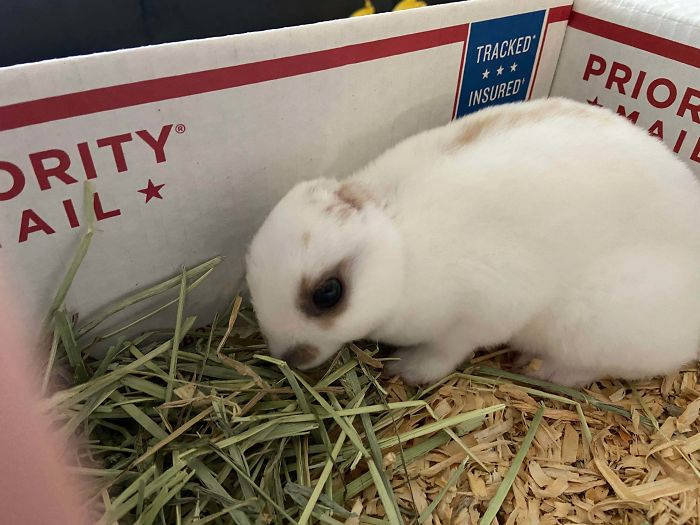 wholesome pet rescue photos earless bunny