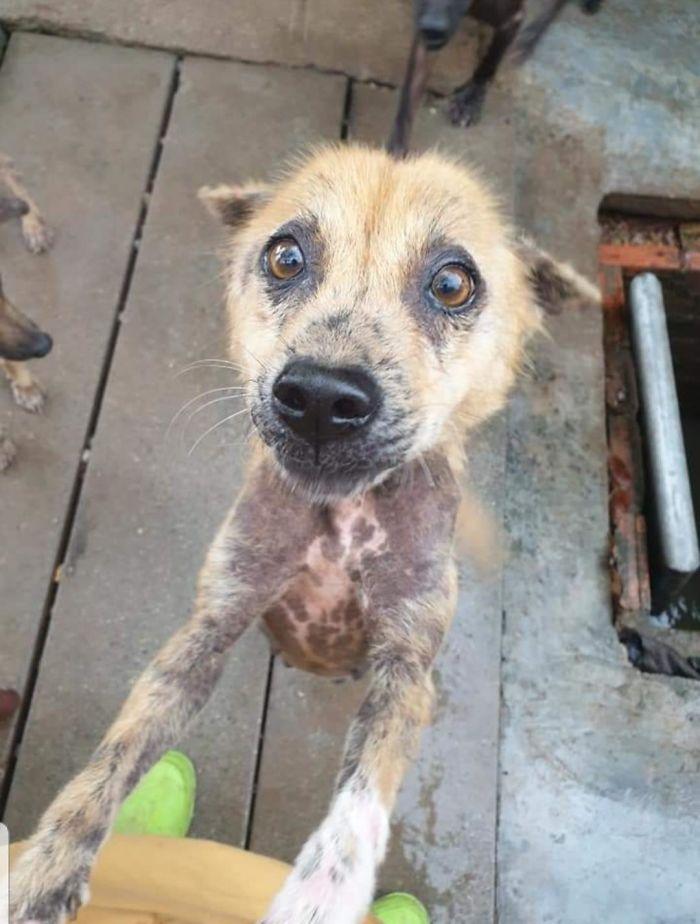 wholesome pet rescue photos happy dog