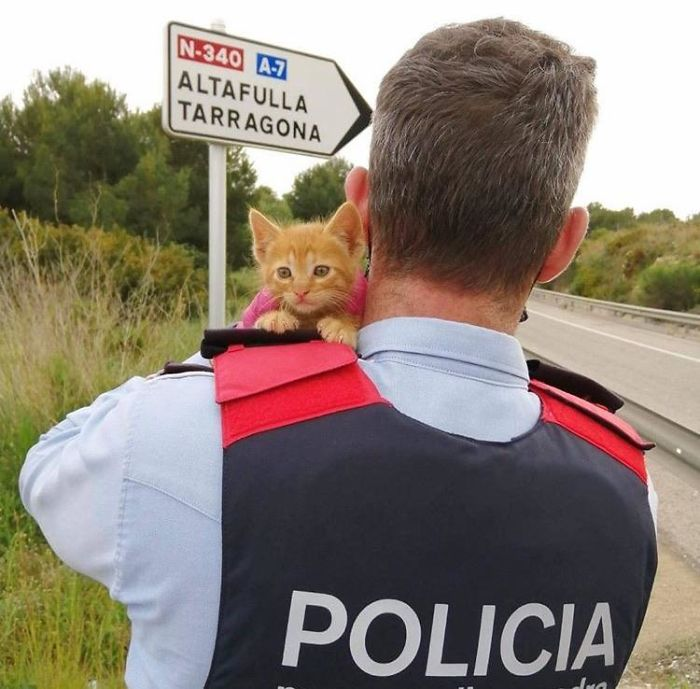 wholesome pet rescue photos police adopts a kitten