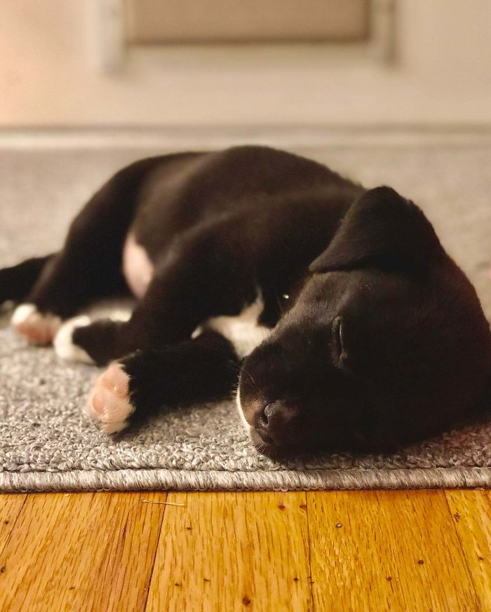wholesome pet rescue photos puppy sleeping