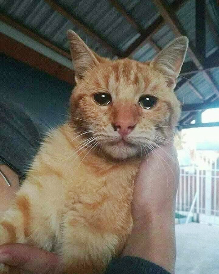 wholesome pet rescue photos teary cat