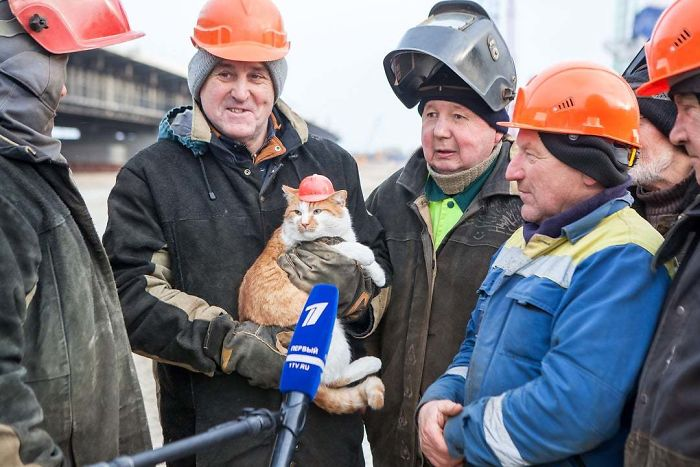 working cats construction team