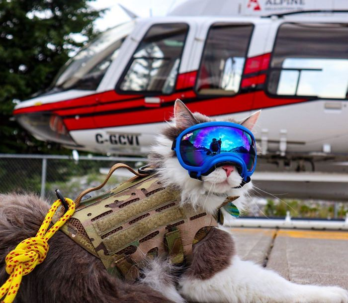 working cats mountain rescuer