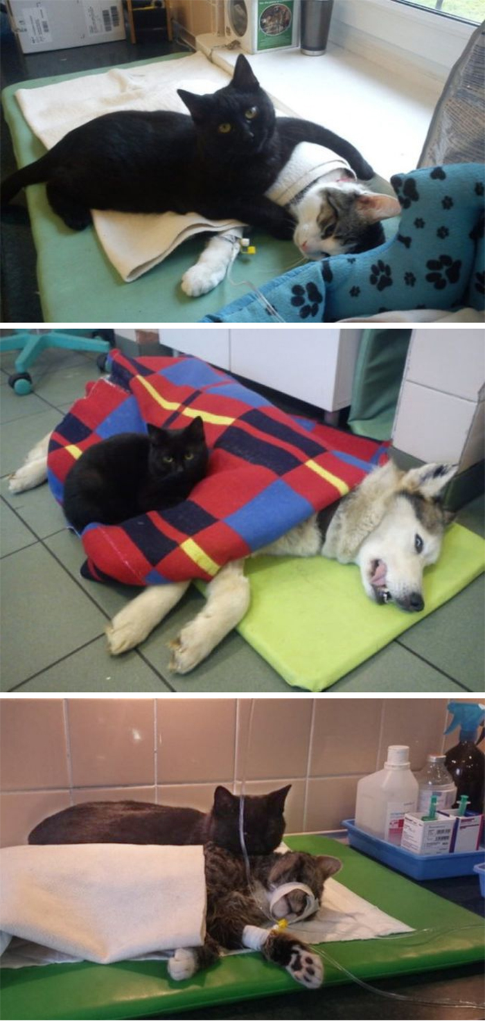working cats therapy nurse vet clinic