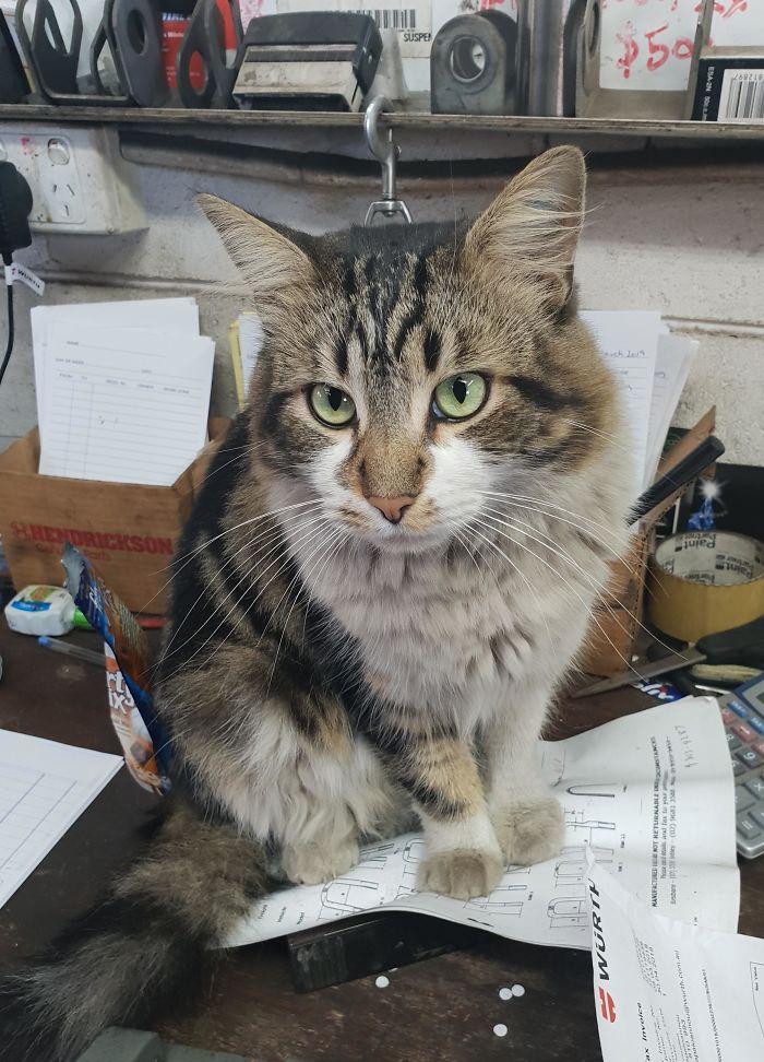 working cats truck repair paperworks