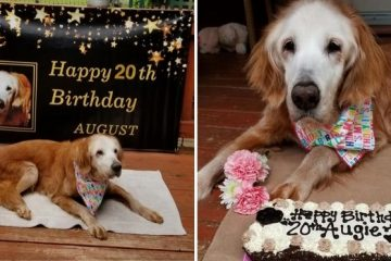 world's oldest golden retriever