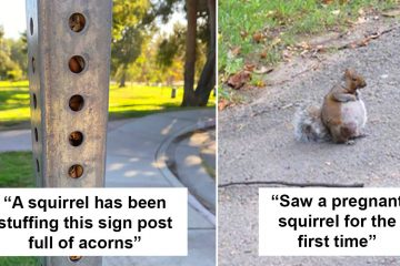 Adorable squirrels