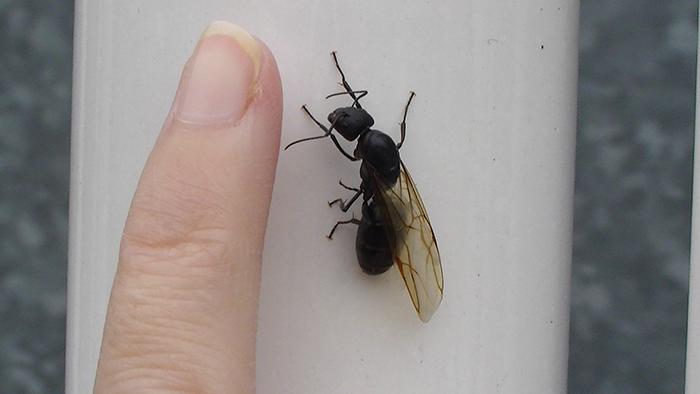 Ant Queen Trivia