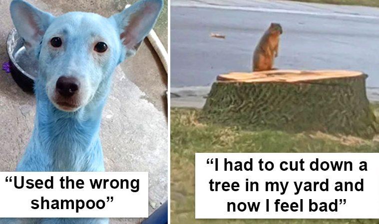 animals having a bad day
