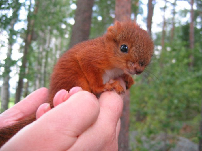 baby squirrel on a person's hand