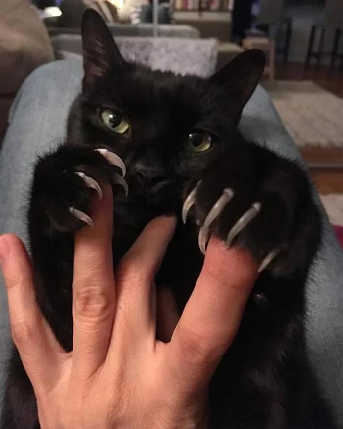 black cat deadly grip murder mittens