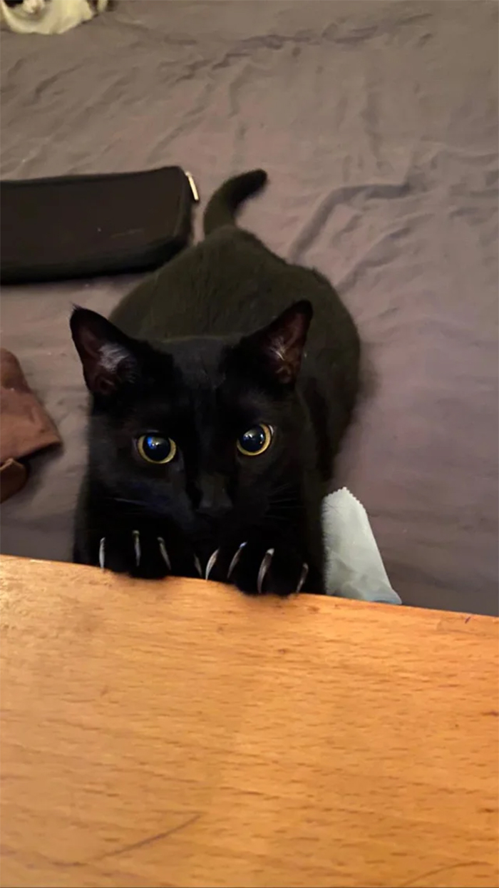 black cat murder mittens