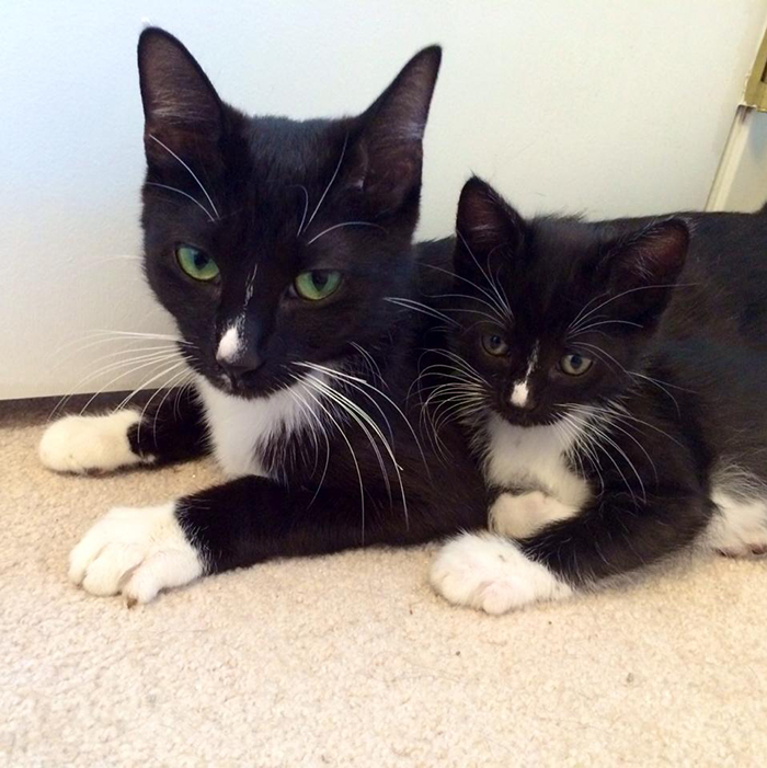 black cat with mini-me