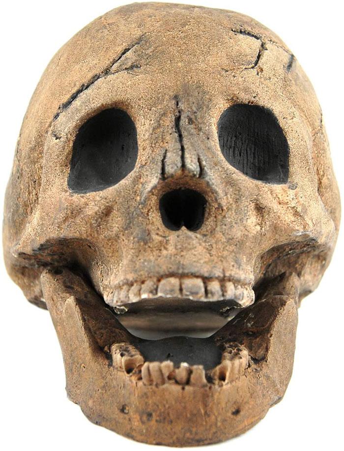brown split jaw skull