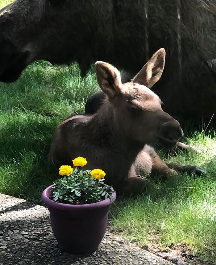 calf and violet plant pot