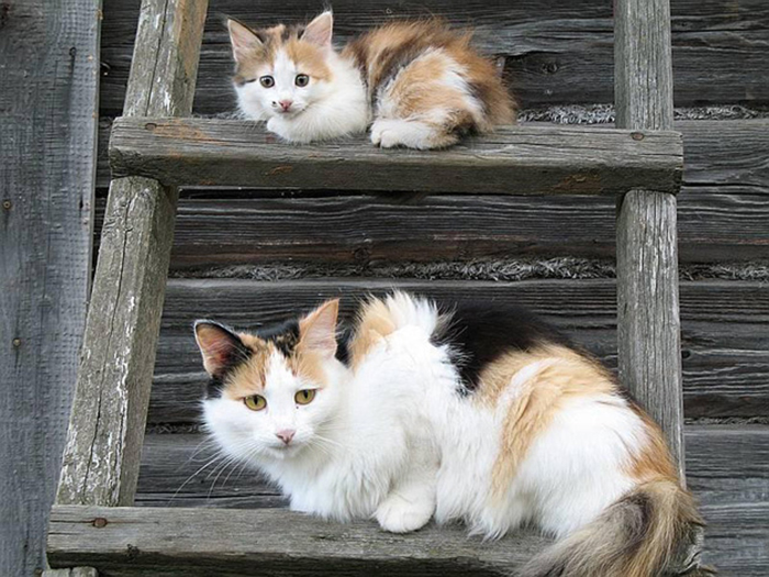 cat and her mini-me on a ladder
