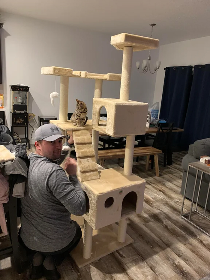 cat hater builds a cat condo