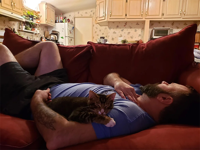cat hater dads end up spoiling their kitties