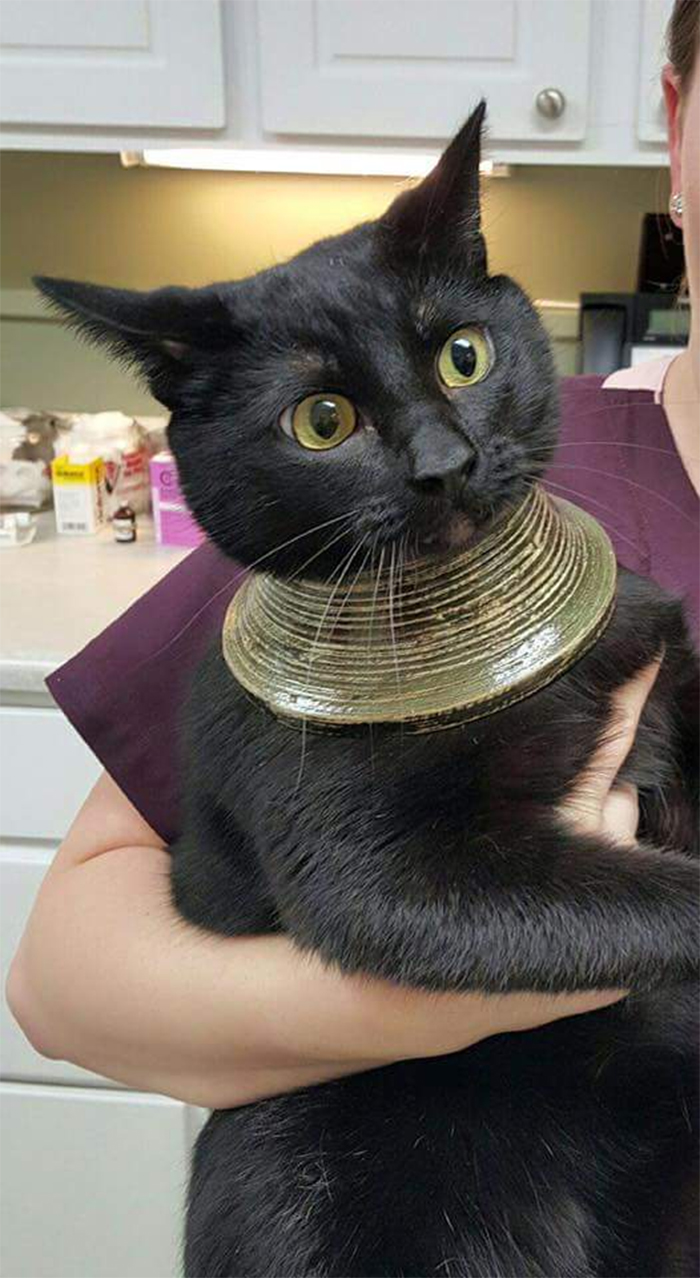 cat head stuck in a vase