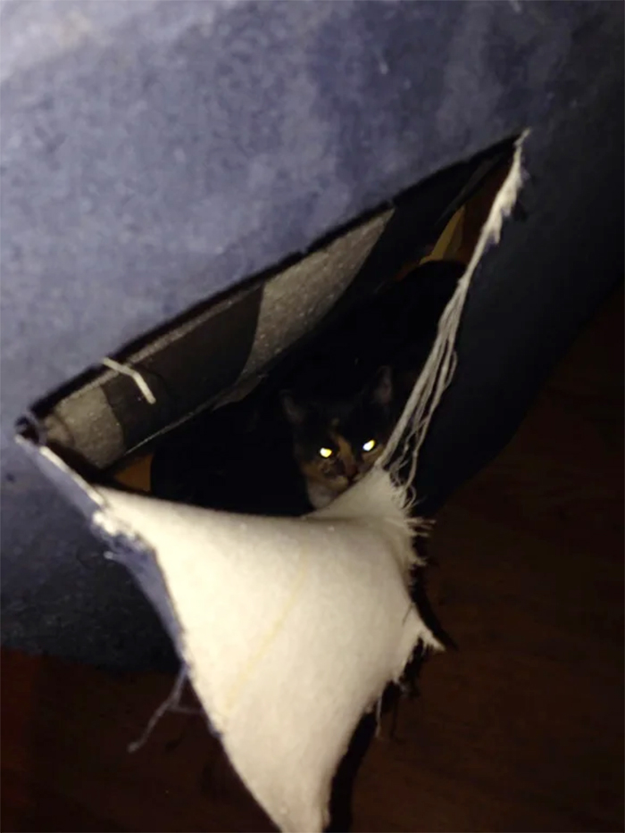 cat hiding inside new couch