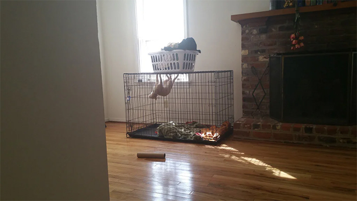 cat in a dog crate hanging upside down