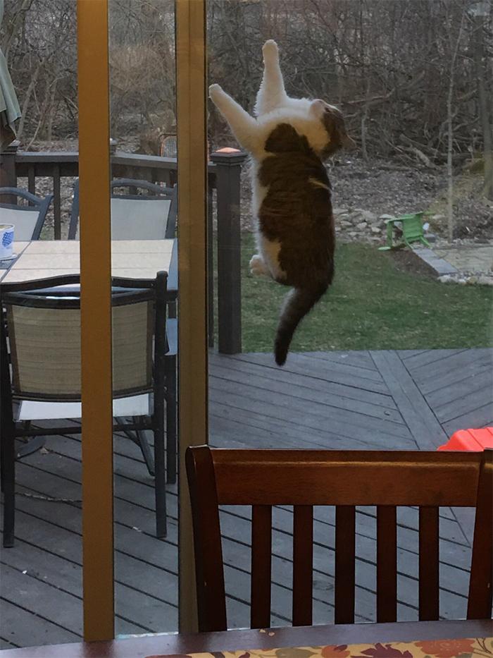 cat stuck between glass door and screen door