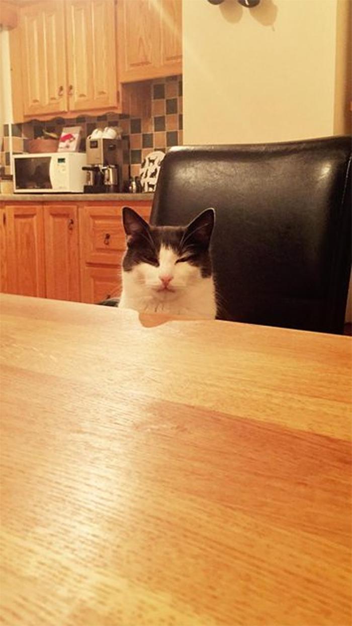 cat vengeful face