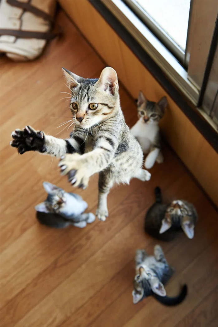 cat with murder mittens jumps high