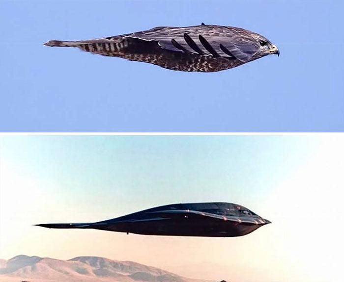 comparison images falcon vs stealth bomber