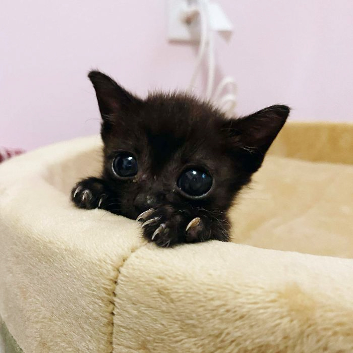 cute black kitten with sharp claws