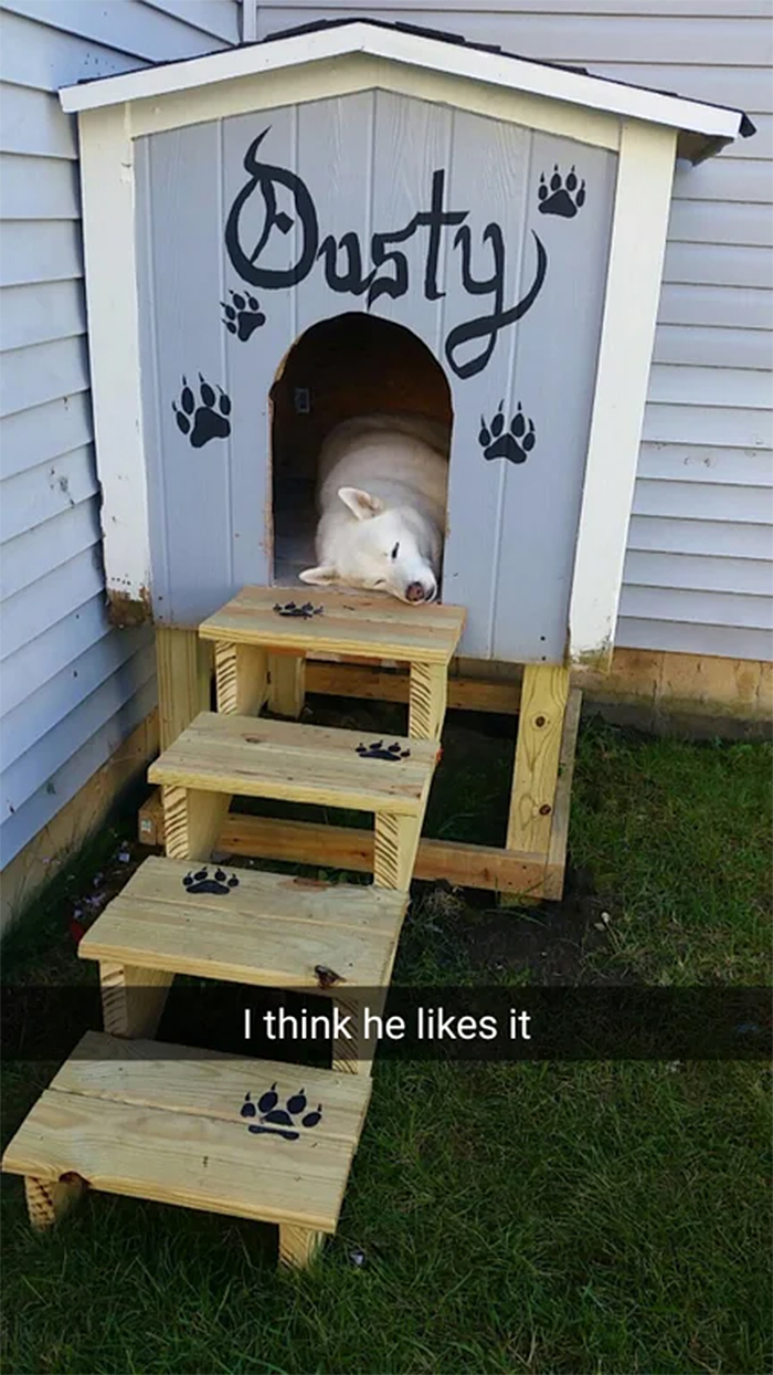 dads who hate dogs building a dog house