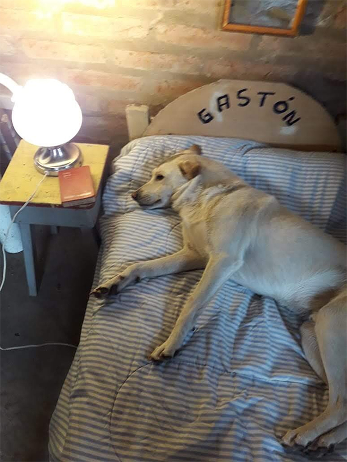 dog has his own bed and night table