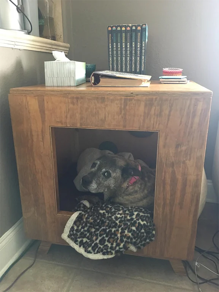dog hater builds a hut for doggy