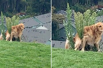 dog poops in weird positions