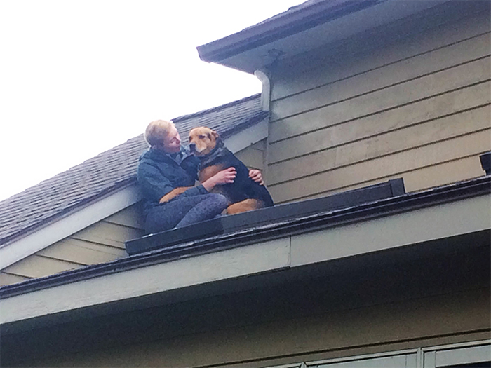 dog stuck on the roof