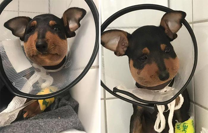 dog versus danger noodle